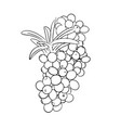 hand drawn black and white sea buckthorn branch vector image
