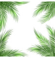 palm leaves frame vector image vector image