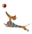 Cartoon of jumping dachshund dog vector image