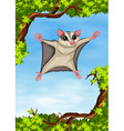 Sugar glider flying on the tree vector image