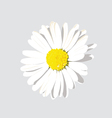 White Flower with background vector image vector image