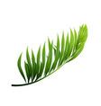 coconut exotical palm green leaf branch vector image vector image