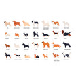 collection of adorable dogs of various breeds vector image