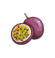 maracuya isolated whole and cut passion fruit vector image