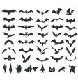 silhouettes of bats vector image