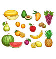 exotic fresh fruits isolated icons set vector image