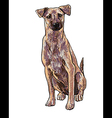 Sitting brown dog vector image vector image