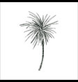 coconut palm sketch or queen palmae with leaves vector image vector image