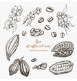 Set of coffee and cocoa in sketch style vector image
