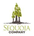 tree sequoia logo vector image