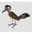 woodpecker on transparent background vector image vector image
