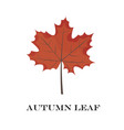autumn leaves isolated on white background simple vector image vector image
