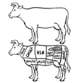 Cow cuts diagram and butchery set vector image vector image