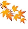 Autumn leaf maple branch vector image