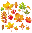 colorful autumn leaves collection vector image vector image