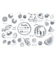 fruits hand drawn sketch icons set organic food vector image