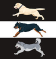 running dogs collection for your design vector image