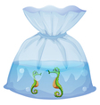 A pouch with seahorses vector image vector image