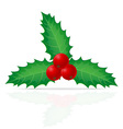 christmas holly berry vector image