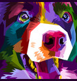 colorful border collie dog isolated on pop art vector image vector image
