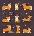 adorable welsh corgi dogs with yellow fur set vector image