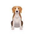 beagle with shiny eyes in sitting position small vector image vector image