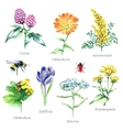 Collection of hand drawn medical herbs and plants vector image vector image