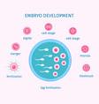 egg fertilization process flat template vector image