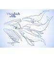 Graphic humpback whales vector image vector image