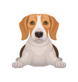 cute beagle with shiny eyes lying isolated on vector image vector image