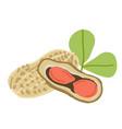 doodle peanuts vector image vector image