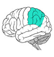 parietal lobe of human brain anatomy side view vector image vector image