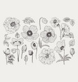 big set of monochrome vintage flowers vector image