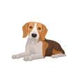 flat design of lying beagle dog small vector image vector image