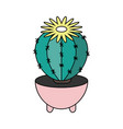 home cactus in a pot for web design vector image vector image