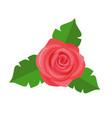 Rose flower green leaves decorative sticker vector image