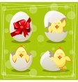 Easter eggs chicks vector image vector image