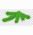 lush green fir pine branch on transparent vector image vector image