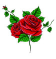 beautiful bouquet with red vector image