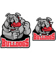bulldog mascot vector image vector image