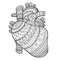 human heart coloring book vector image vector image