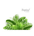 realistic tropical leaves exotic vacation vector image