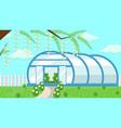 greenhouse in garden flat vector image vector image