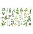 Hand drawn watercolor set herbs