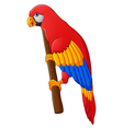 Cute parrot cartoon posing vector image