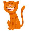 funny cat cartoon animal character vector image