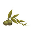 olive fruit cartoon vector image vector image