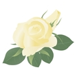 Floral background with yellow roses vector image