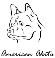 American Akita vector image vector image