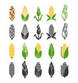 black and color corn harvest icons isolated vector image